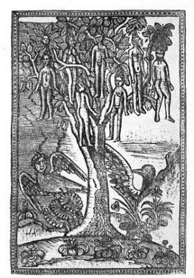 Wak wak (albero parlante)